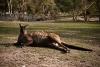Wildlife Park - Ballarat
