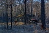 After Bushfire
