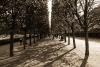 Jardins du Palais Royal