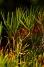 Bibbulmun Track - Le Bush