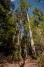Bibbulmun Track - Valley of The Giants
